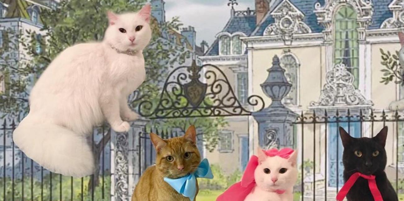 Son Chat Duchesse Donne Naissance Aux Memes Chatons Que Dans Les Aristochats Radio Scoop